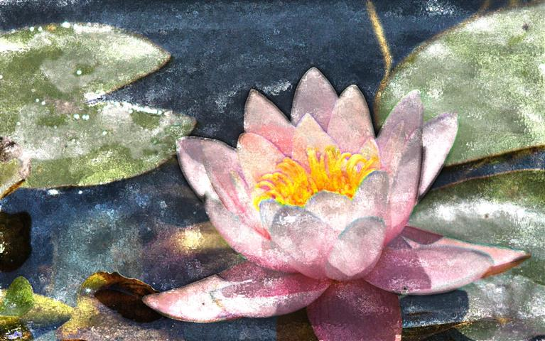 water lily watercolor handpaint