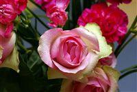 una zona verde y rosa rosa