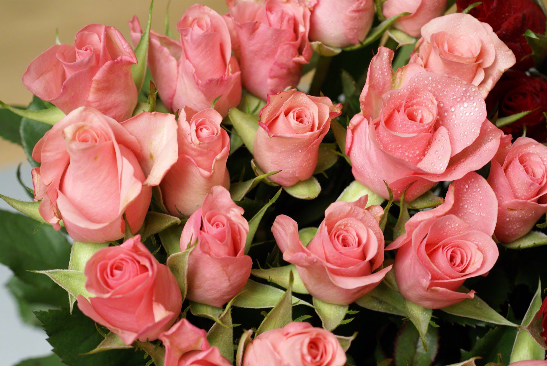 http://www.fabiovisentin.com/photography/photo/12/mini-pink-roses-01608.jpg