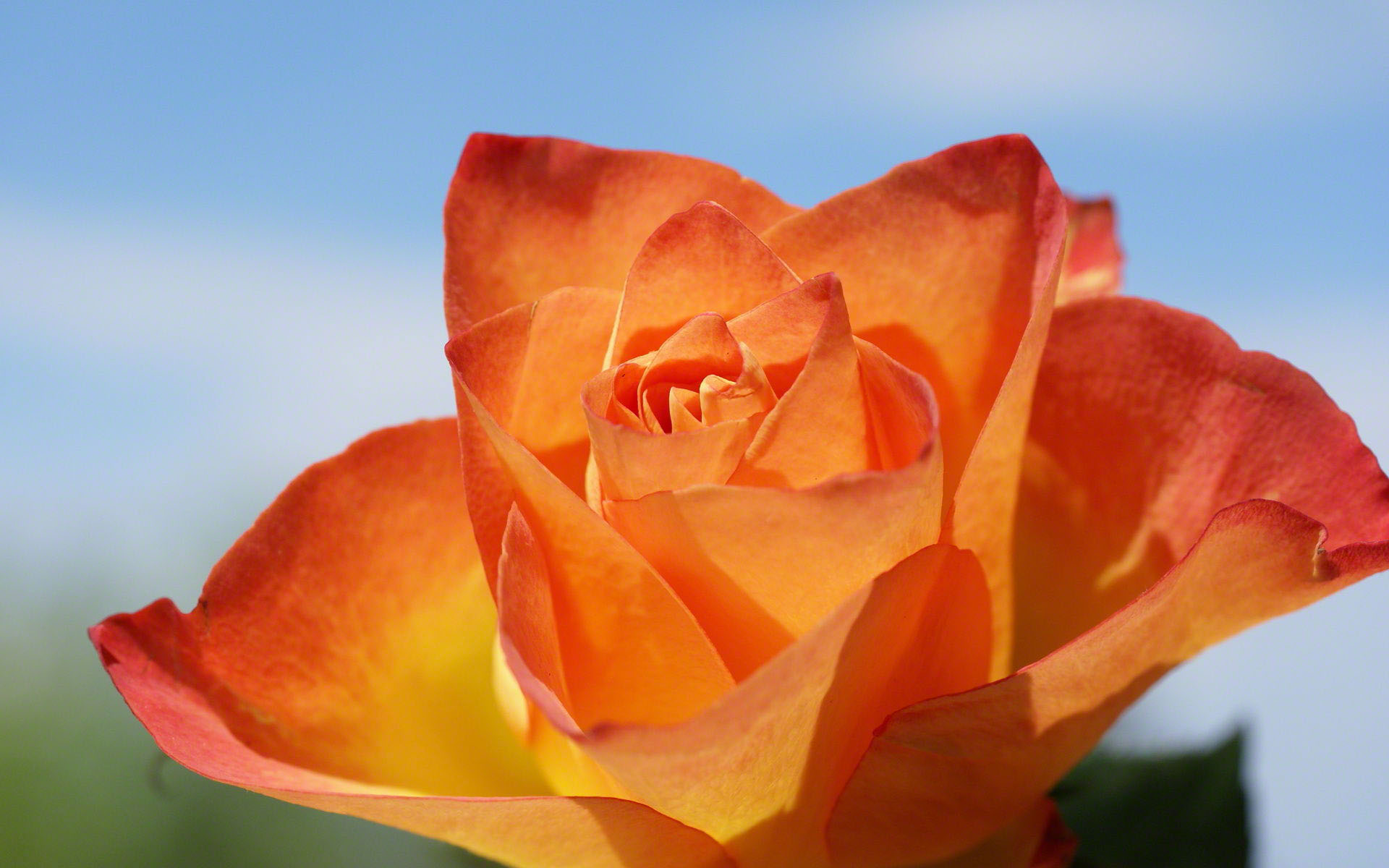 http://www.fabiovisentin.com/photography/photo/12/orange-roses-02739.jpg