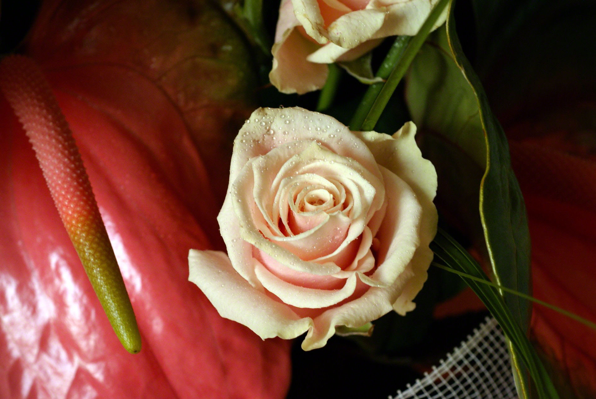 http://www.fabiovisentin.com/photography/photo/12/peach-rose-00854.jpg