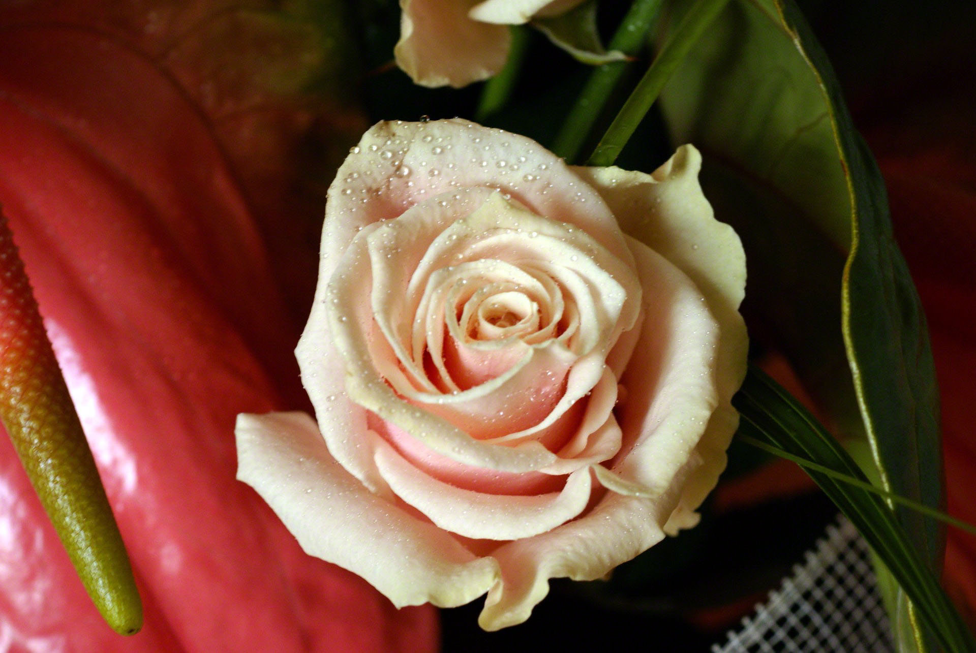 http://www.fabiovisentin.com/photography/photo/12/peach-rose-00856.jpg