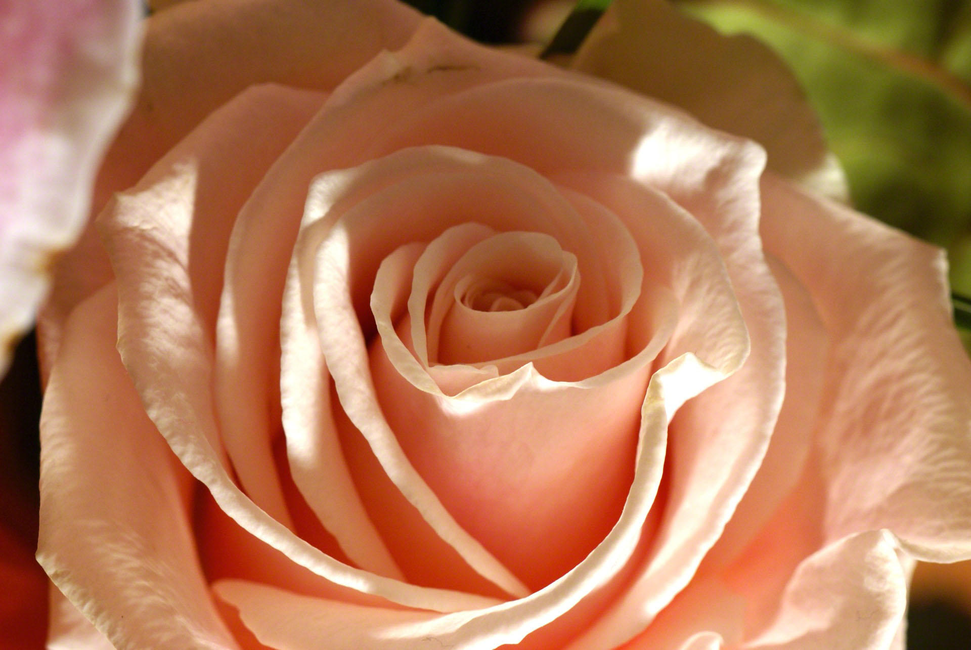 http://www.fabiovisentin.com/photography/photo/12/peach-rose-macro-dsc01131.jpg