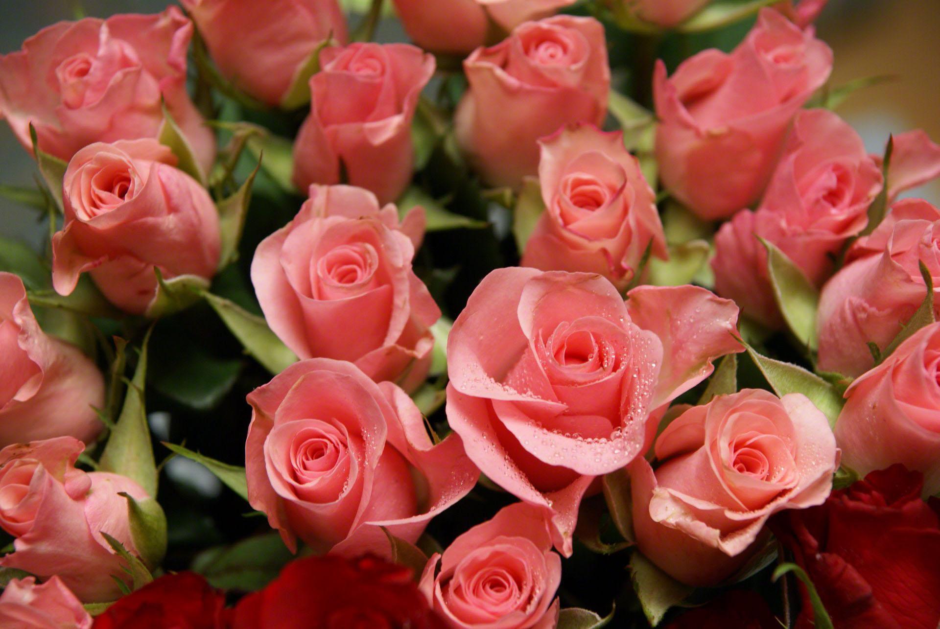 http://www.fabiovisentin.com/photography/photo/12/pink-roses-01645.jpg