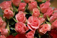 mini rosa rosas