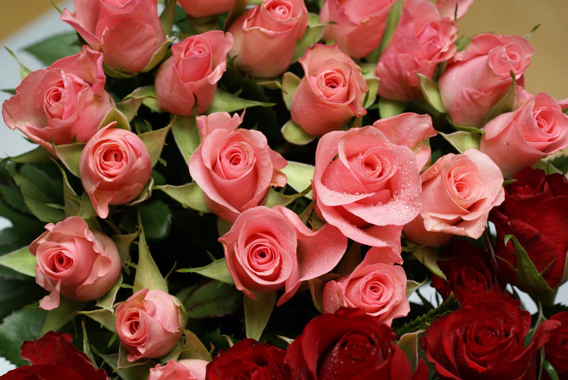 http://www.fabiovisentin.com/photography/photo/12/pink-roses-bouquet-romanticdsc01624.jpg