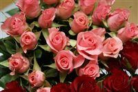 mini rosa rosas foto