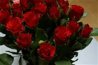 mini red roses photo