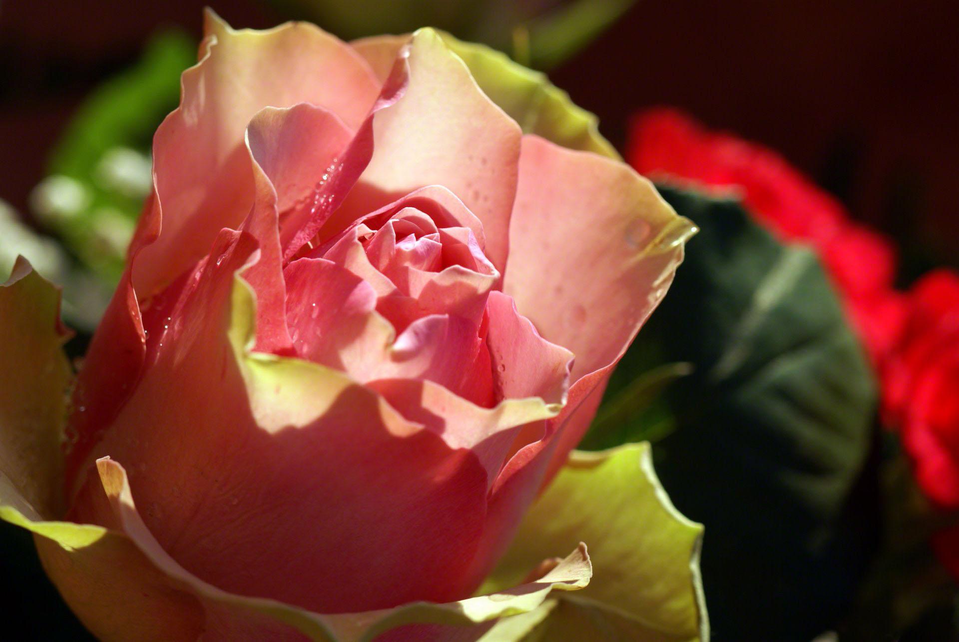 http://www.fabiovisentin.com/photography/photo/12/rose-macro-001.jpg