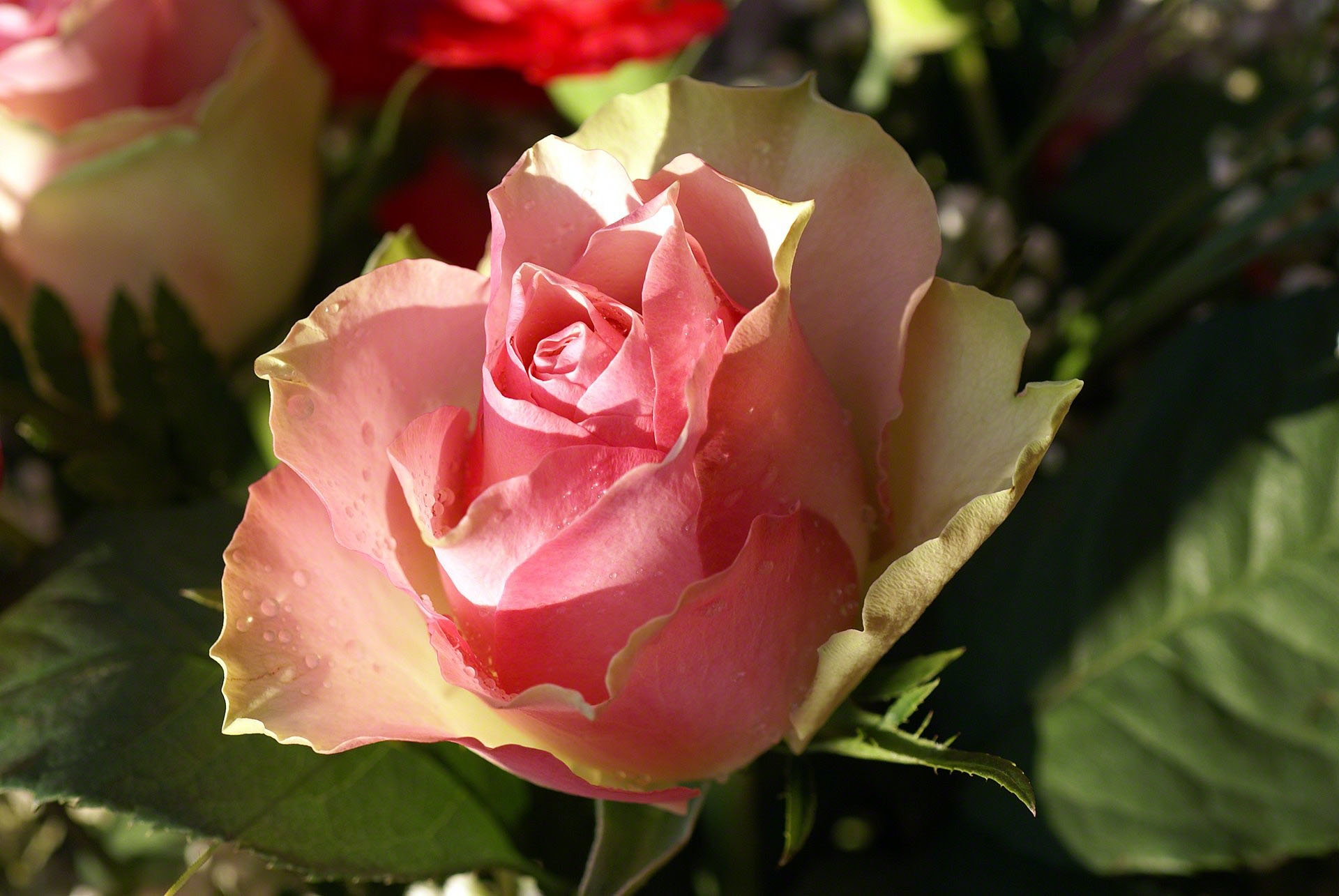 http://www.fabiovisentin.com/photography/photo/12/rose-macro.jpg