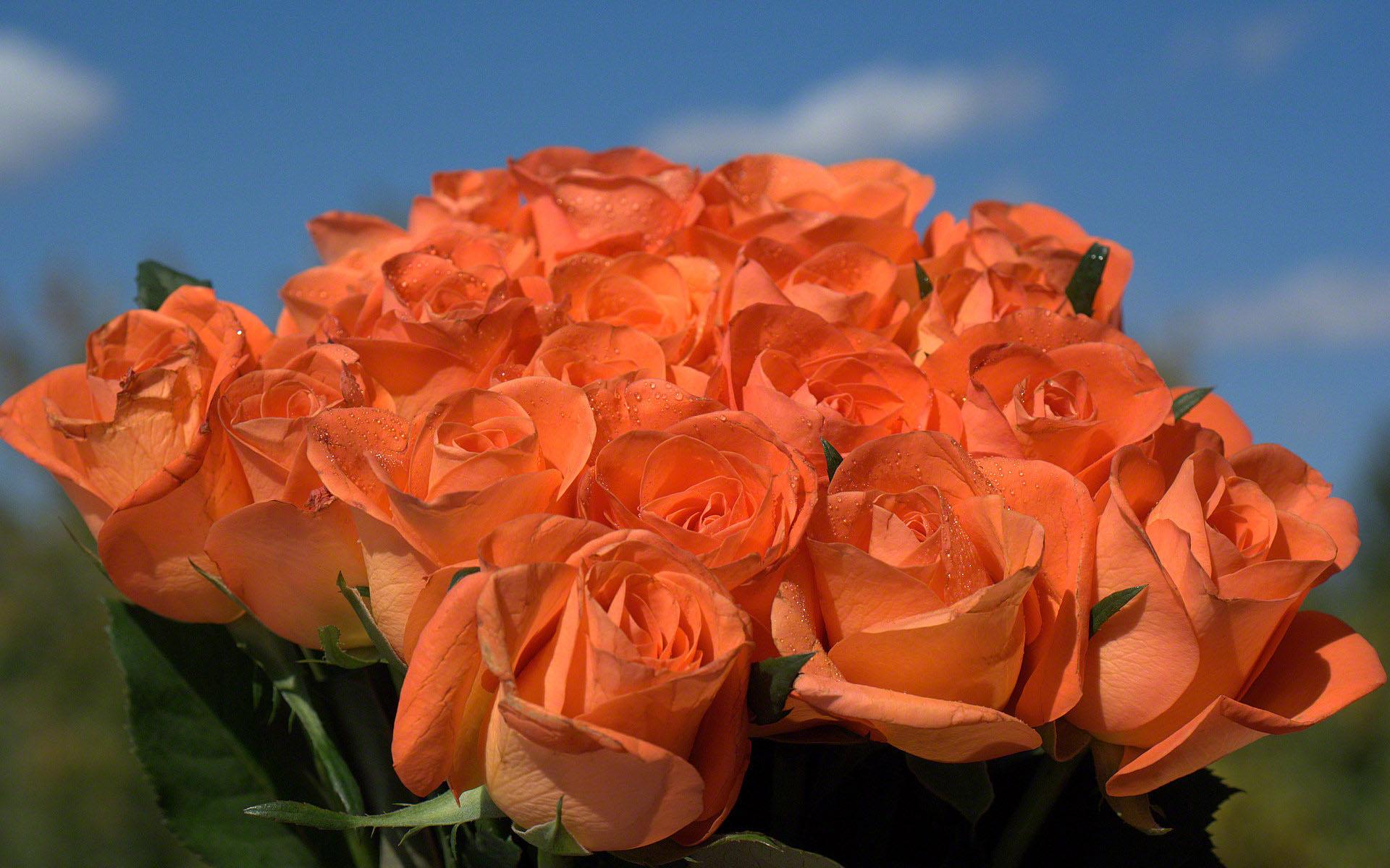 http://www.fabiovisentin.com/photography/photo/12/roses-photo-wallpaper-02517.jpg