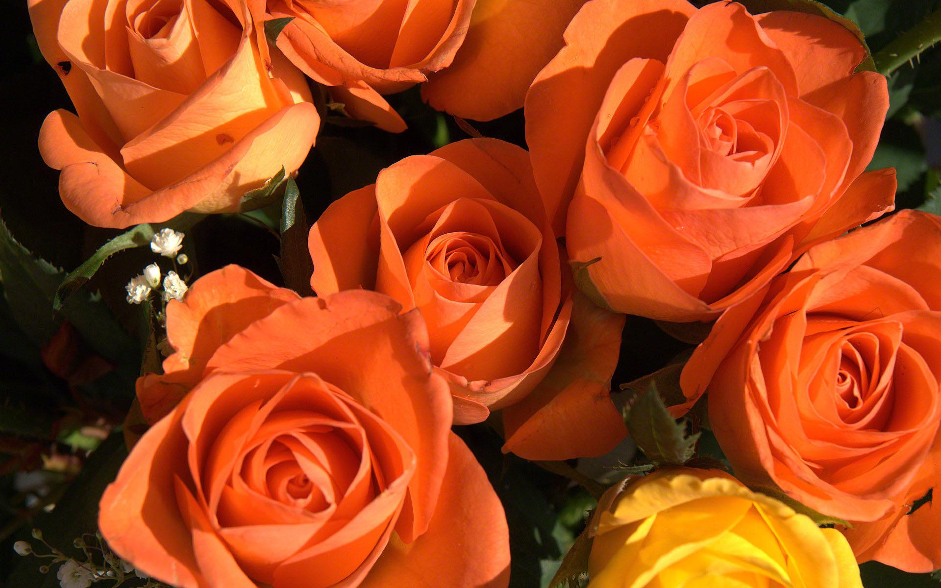 http://www.fabiovisentin.com/photography/photo/12/roses-photo-wallpaper-02640.jpg