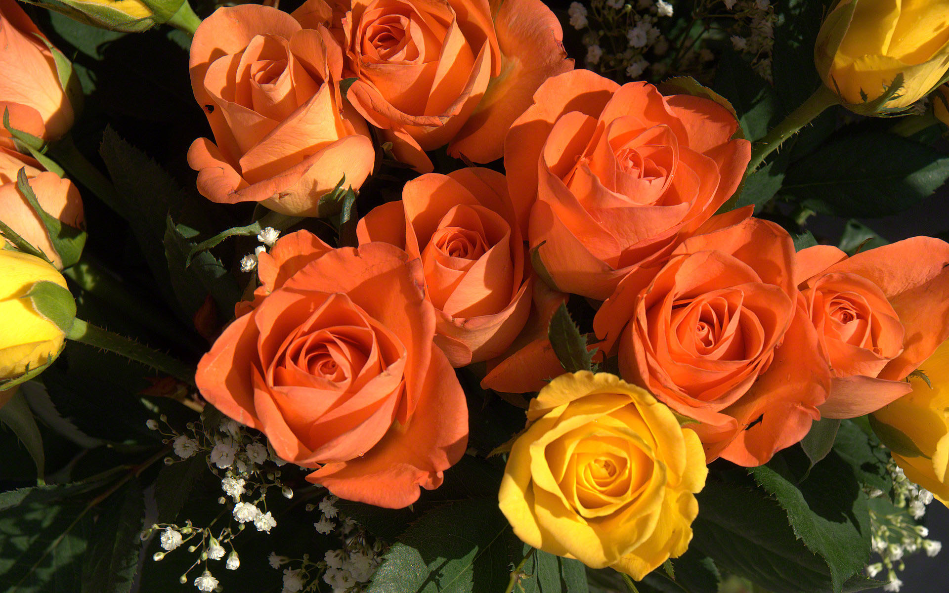 http://www.fabiovisentin.com/photography/photo/12/roses-photo-wallpaper-02644.jpg