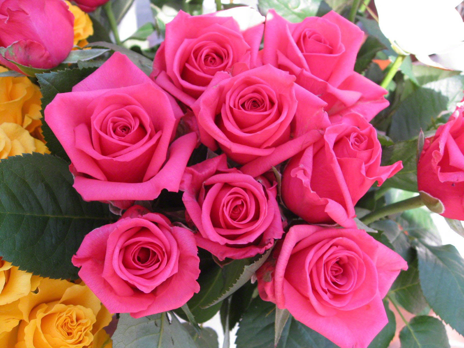 pink roses wallpaper bouquet