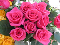 Pink Roses Wallpaper Bouquet