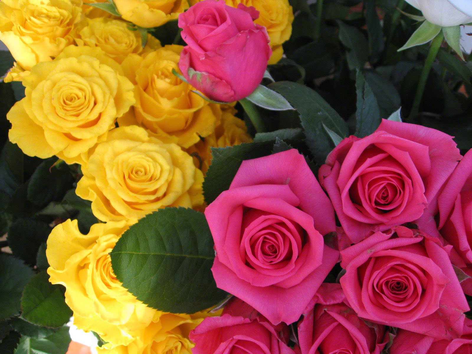 http://www.fabiovisentin.com/photography/photo/12/roses-wallpaper-roses-bouquets4350.JPG