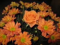 rosas anaranjado Macro