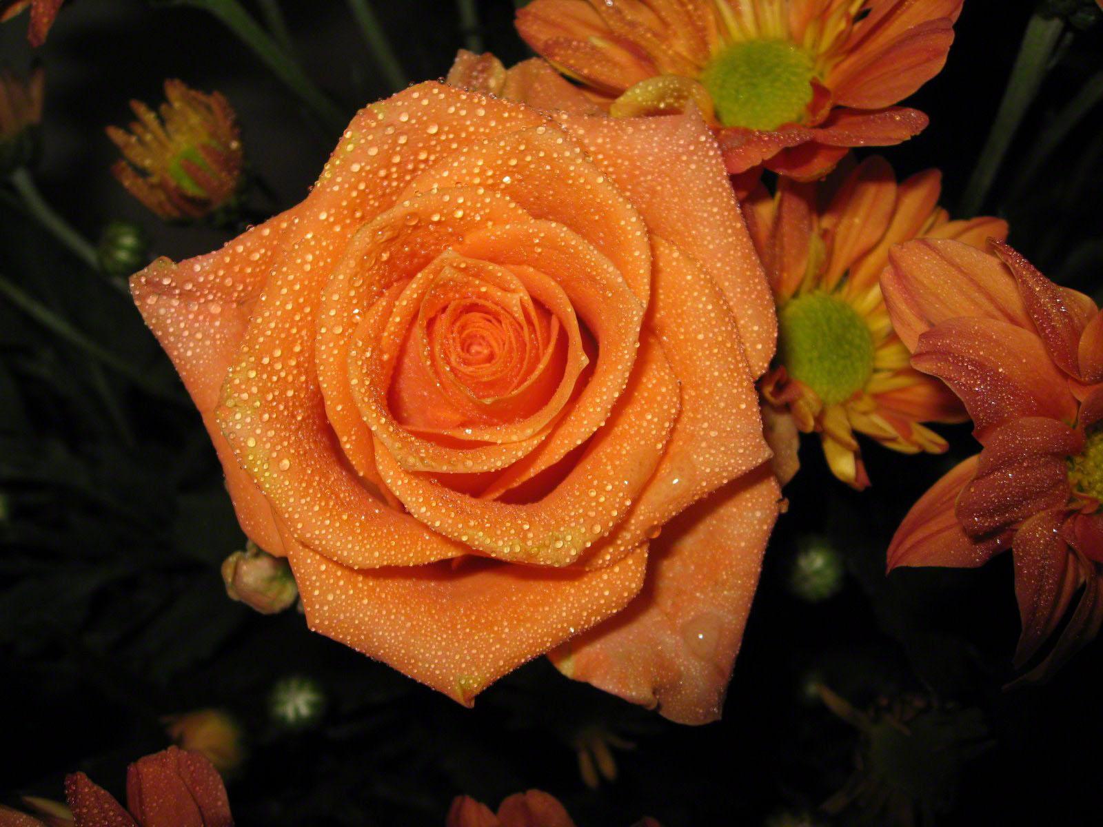 http://www.fabiovisentin.com/photography/photo/12/roses-wallpaper-roses-bouquets4400.jpg