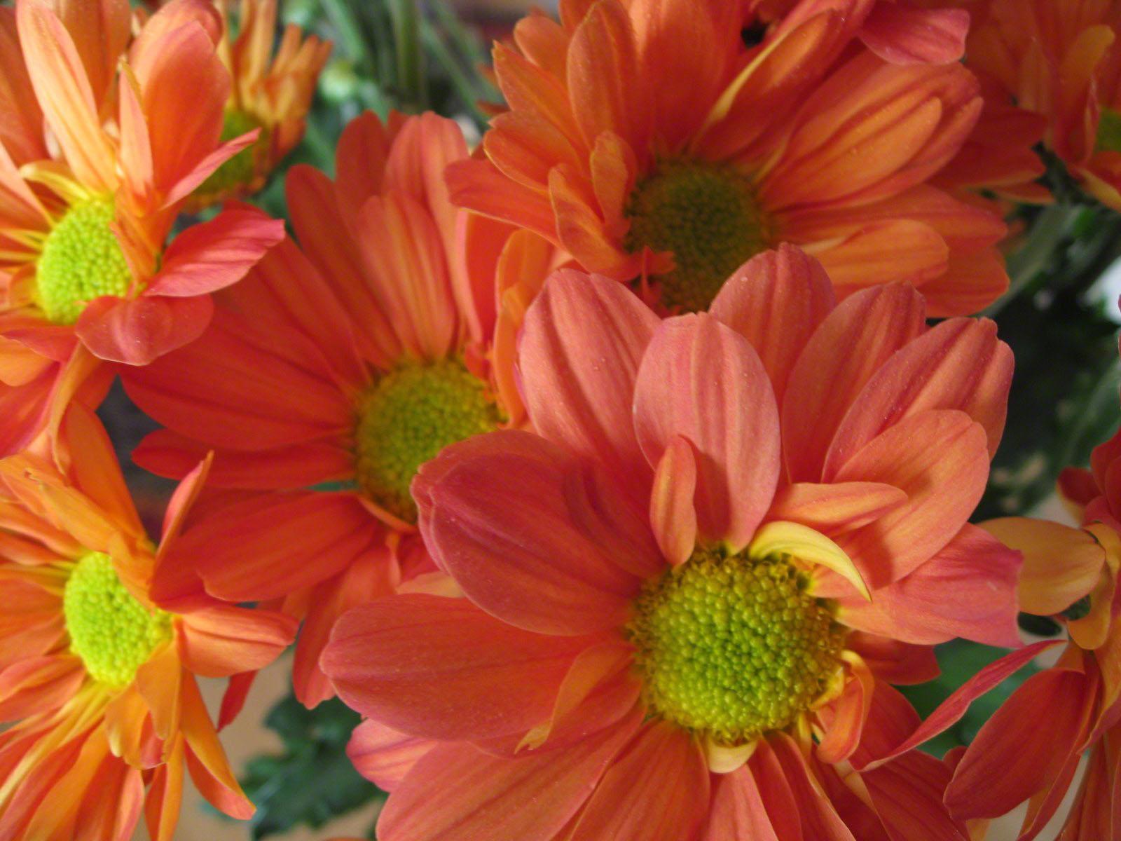 http://www.fabiovisentin.com/photography/photo/12/roses-wallpaper-roses-bouquets4407.JPG