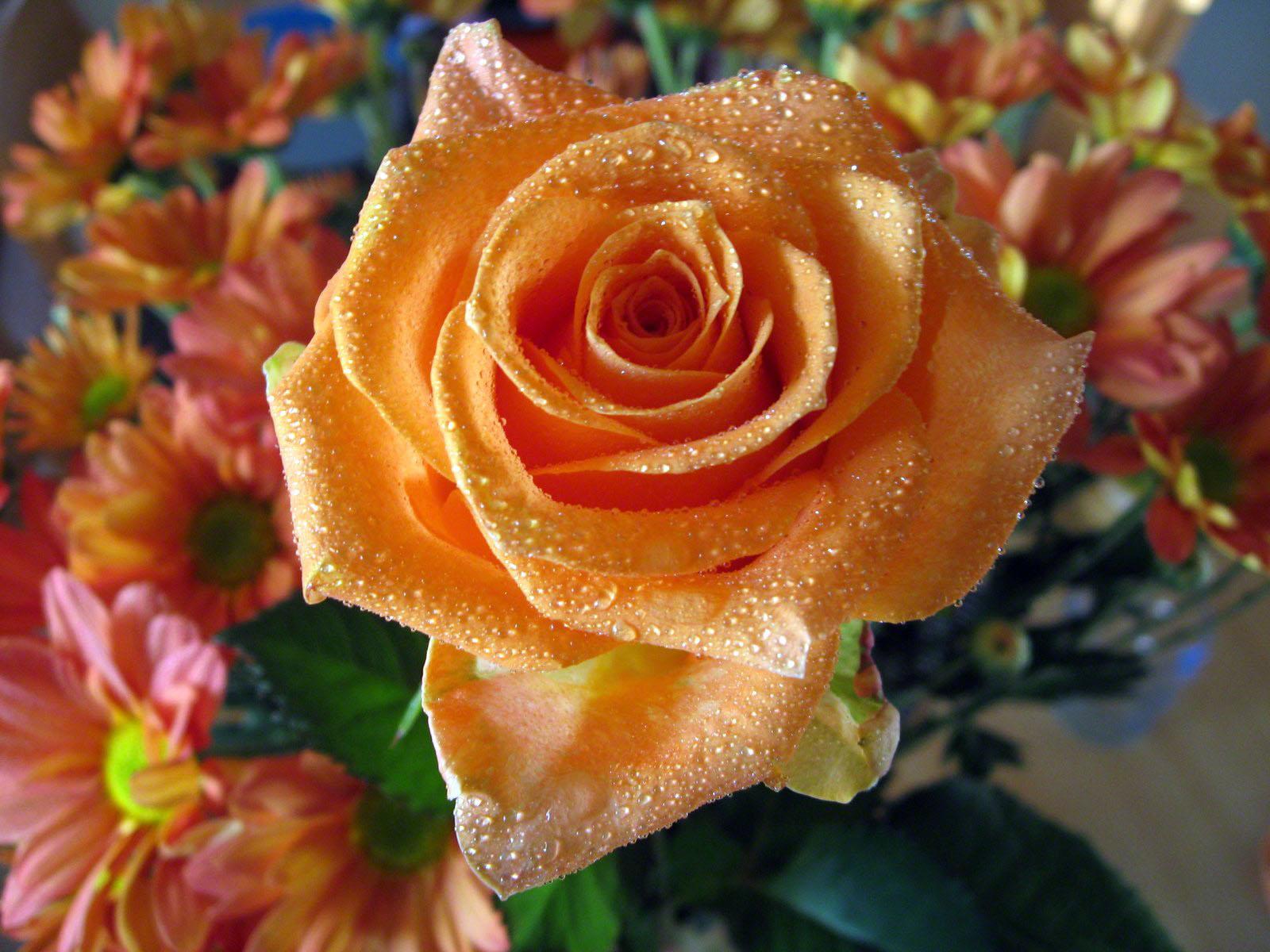 http://www.fabiovisentin.com/photography/photo/12/roses-wallpaper-roses-bouquets4426.JPG