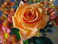 Orange Wallpaper Rose Bouquet
