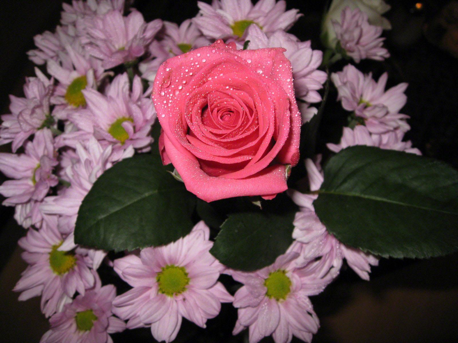 http://www.fabiovisentin.com/photography/photo/12/roses-wallpaper-roses-bouquets4441.JPG