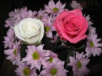 Pink ramo de rosas fondo de pantalla