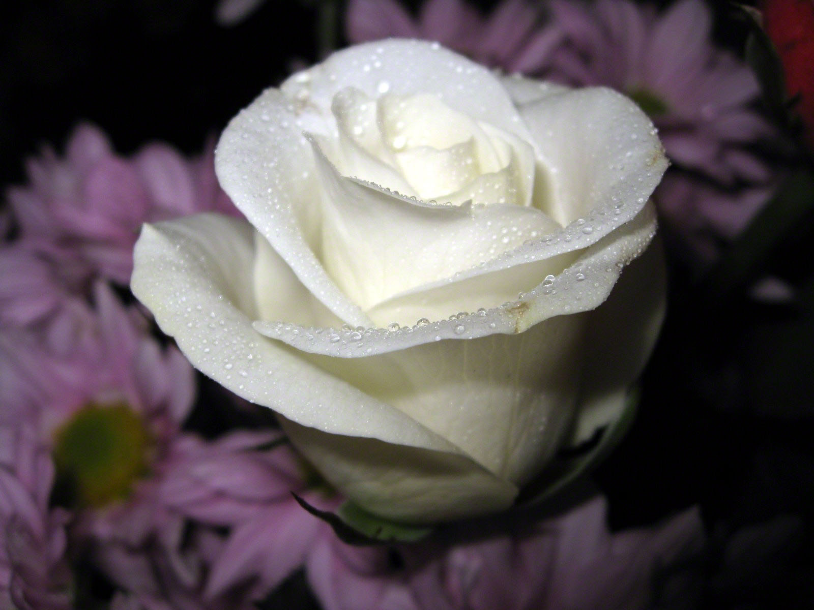 http://www.fabiovisentin.com/photography/photo/12/roses-wallpaper-roses-bouquets4473.JPG