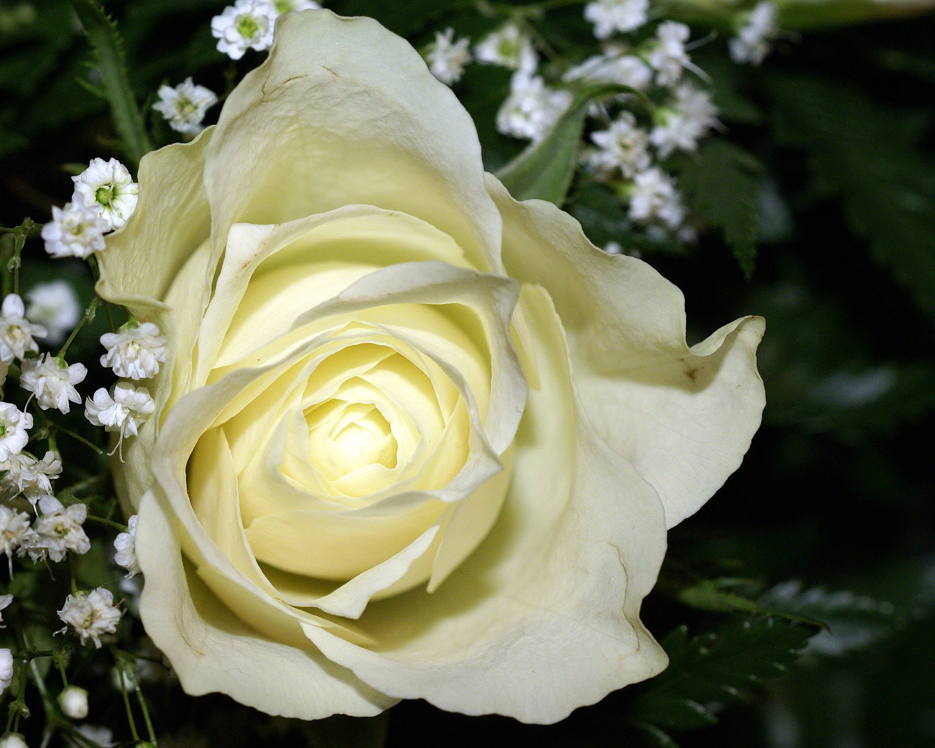 http://www.fabiovisentin.com/photography/photo/12/white-rose-bouquet-0266513.jpg
