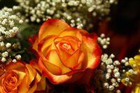 rosas anaranjado