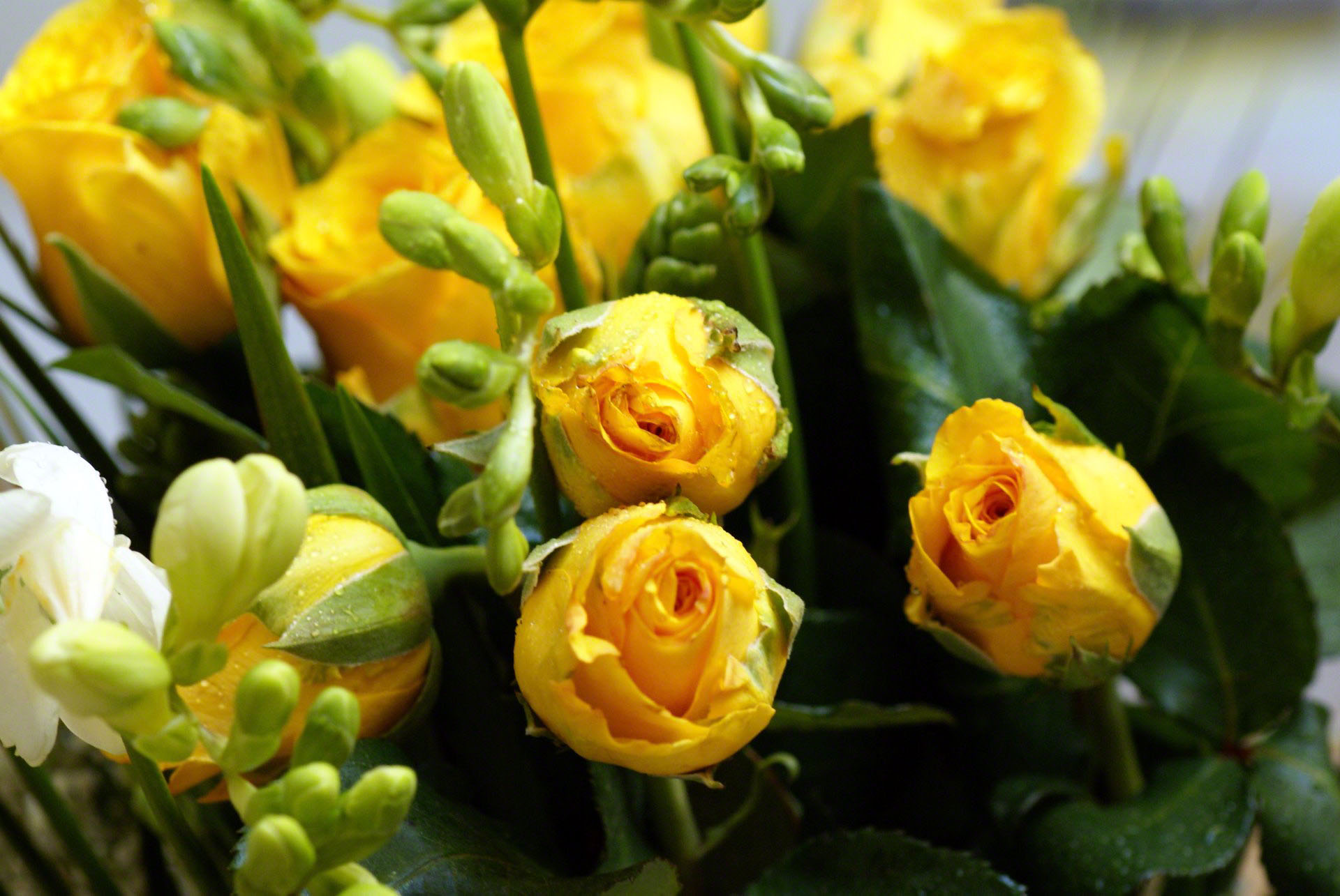 http://www.fabiovisentin.com/photography/photo/12/yellow-roses-bouquet-00884.jpg
