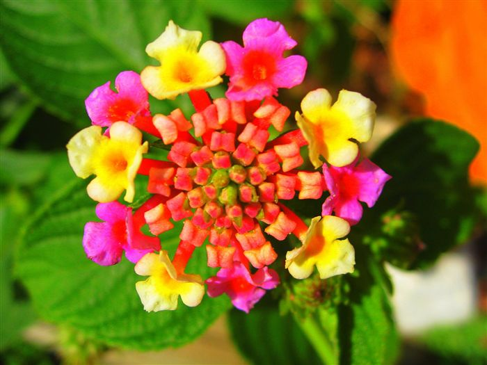 photo Exotic Flower