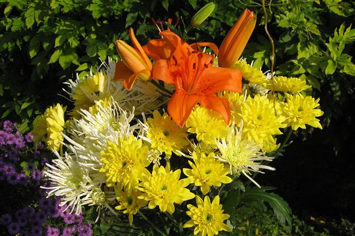 Lilium bouquets photo