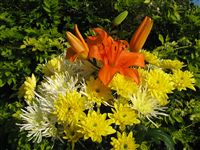 Lilium bouquet with yellow mums