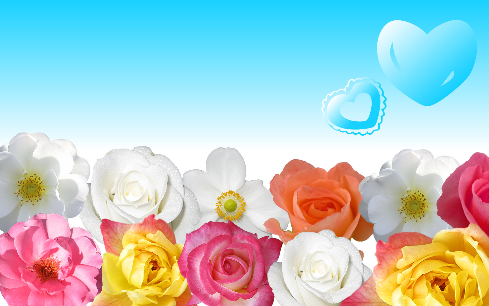 Flower Power Wallpaper Photo : download Full High resolution