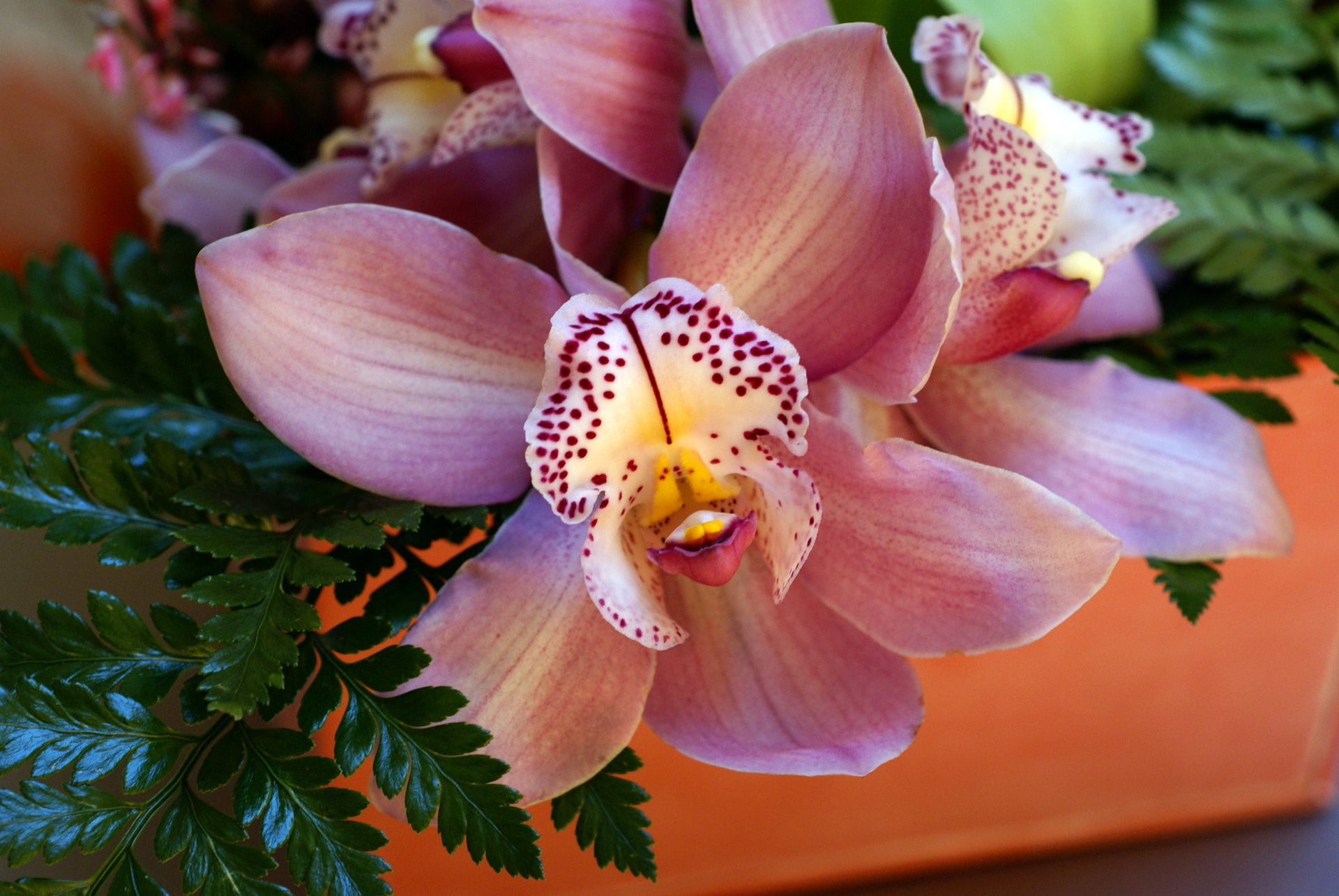beautiful-orchid-00916.jpg