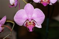 Beautiful Orchid&nbsp;