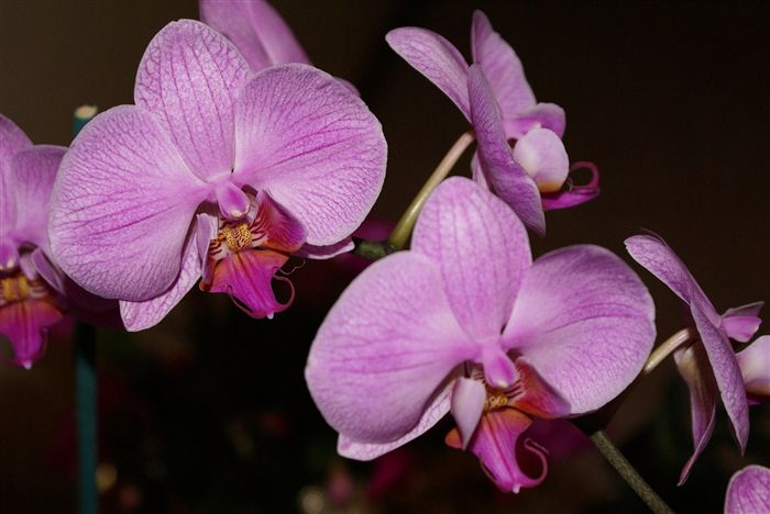 photo Beautiful Orchids