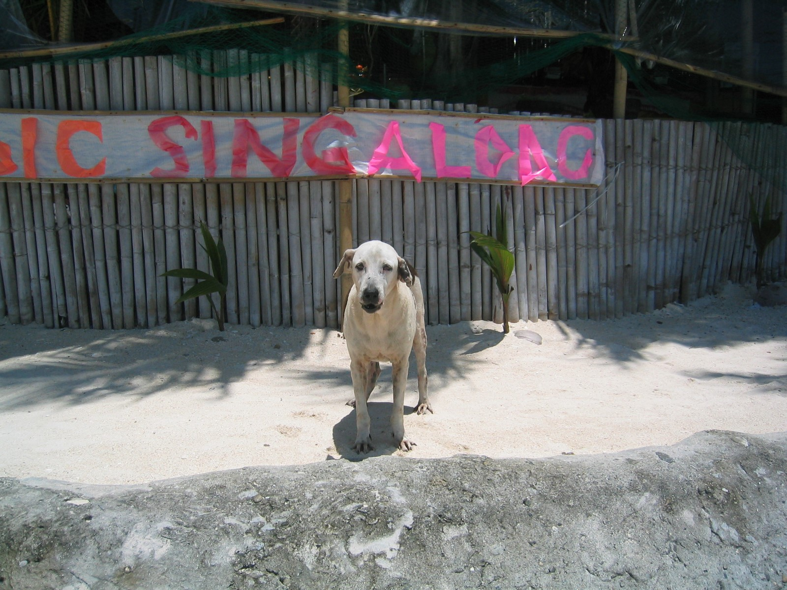 Dogs on boracay