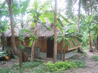 Boracay lush vegetation inside island