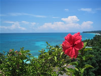 Boracay top hill oceanview with hibiscus