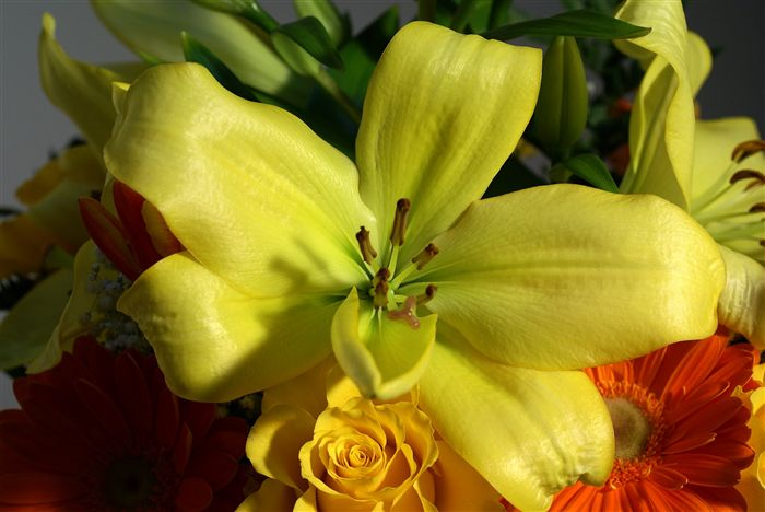 green lilium photo