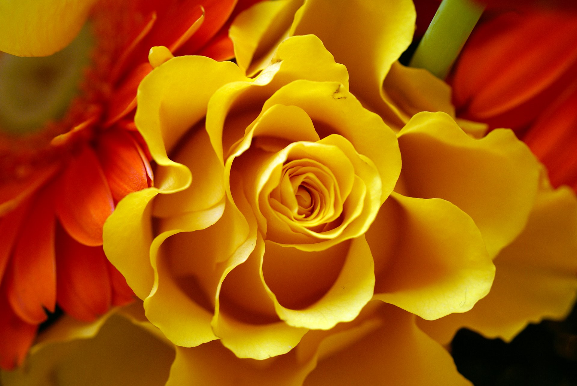 Flower bouquets flower composition photo and wallpapers whether amazing yellow rose izmirmasajfo
