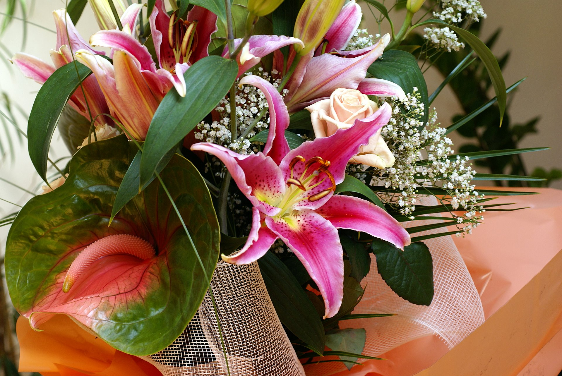 Anthuriums the flamingo flowers type of flowers wallpaper for Fleurs amaryllis bouquet