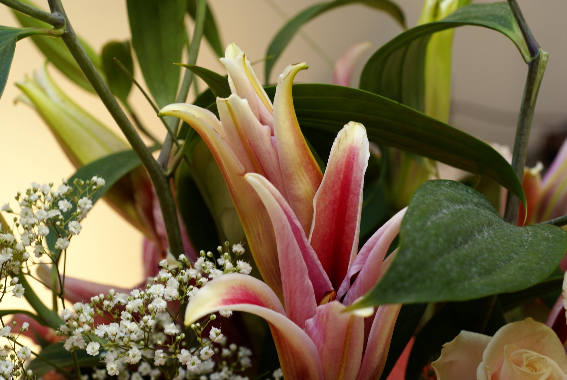 http://www.fabiovisentin.com/photography/photo/20/lilium-and-peach-rose-bouquet-00811.jpg