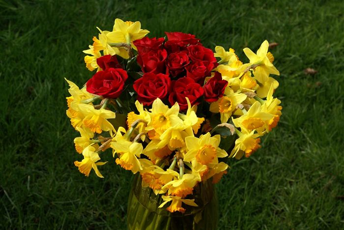 Red Roses and Yellow Narcissus