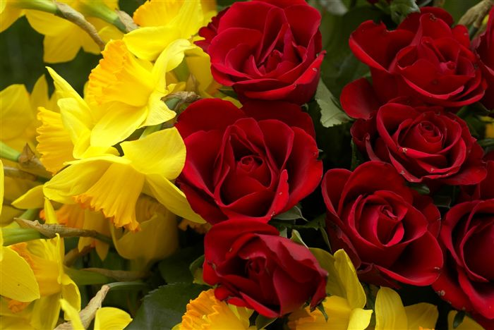 Roses and yellow narcissus bouquet