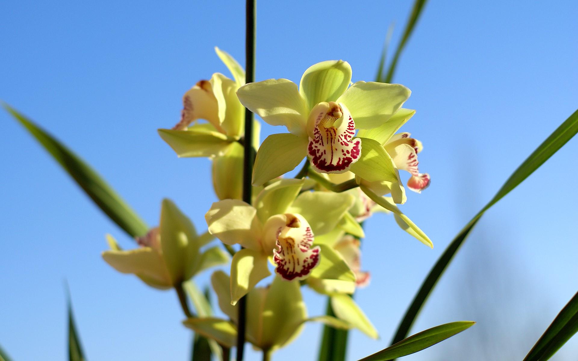 Orquideas Fondo De Pantalla Fotos Orquideas Rosas Orquideas