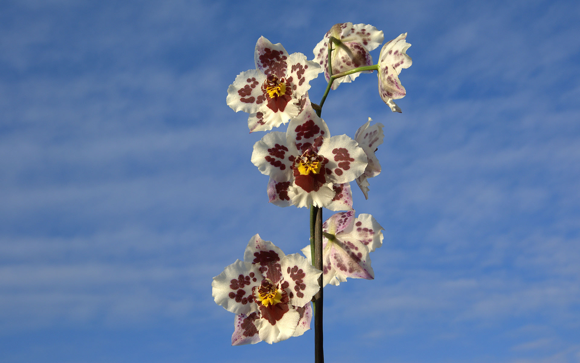 Fotos de Orquideas..Rosas y Tulipanes .. Altisima definicion