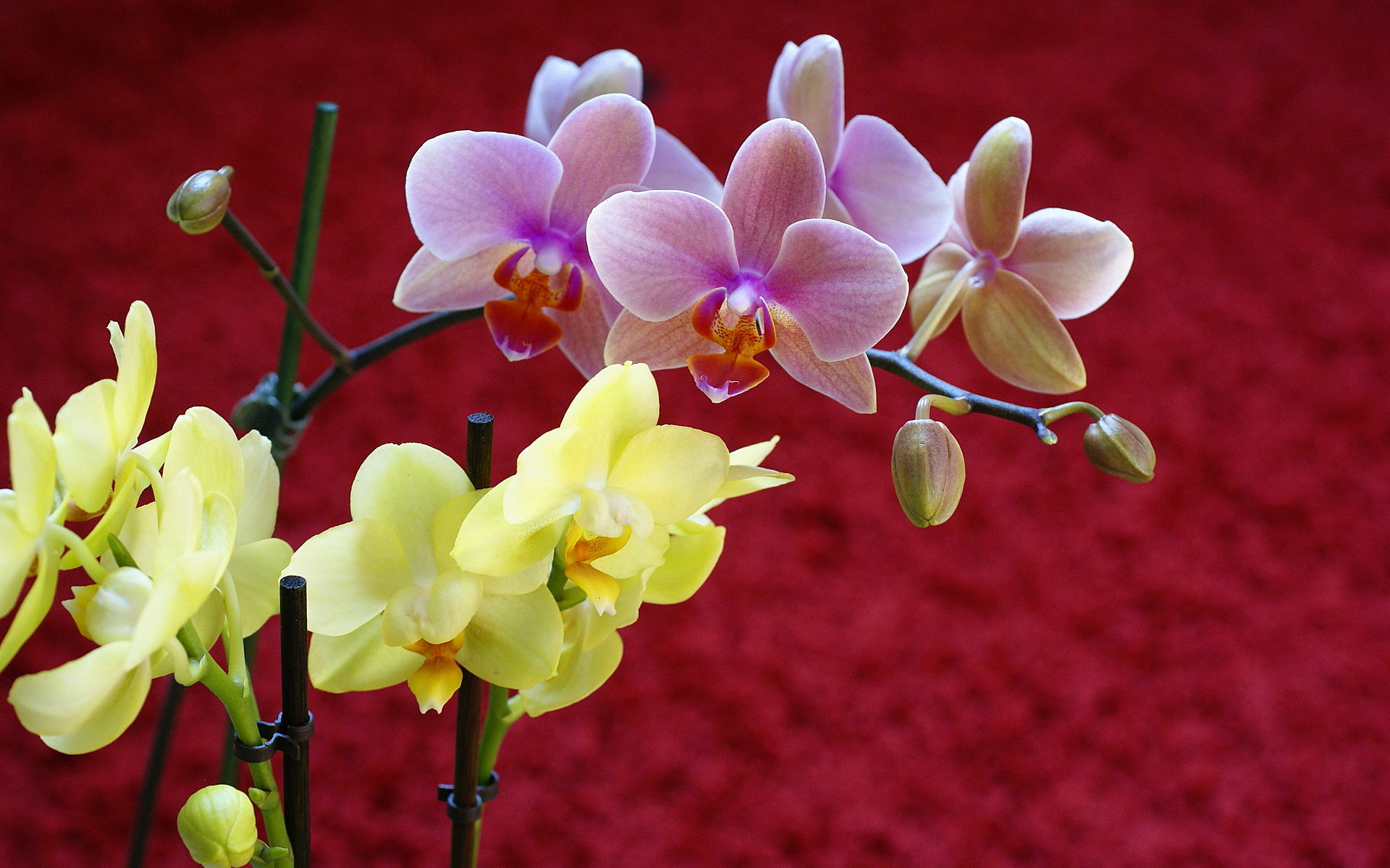orchids wallpapers best - photo #25
